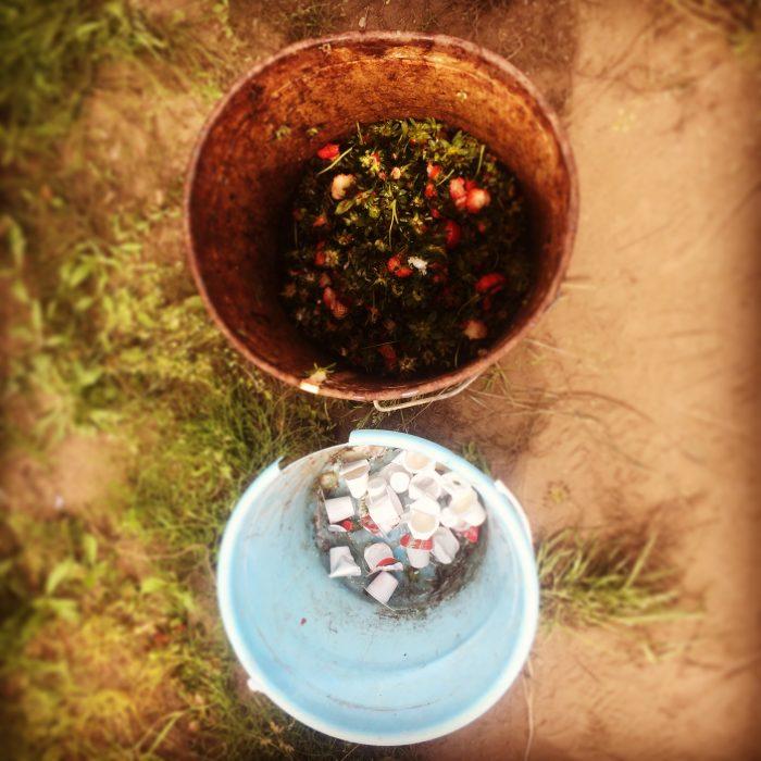 近藤いちご園 ゴミ